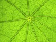 leaf nas 1