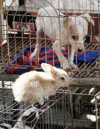 fair animals