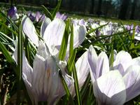 Macro on spring
