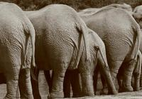 Elephant Pub 1
