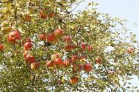 an apple 3