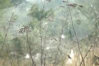 Dew on spider's web