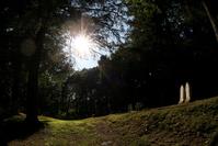 Cemetery Sunlight