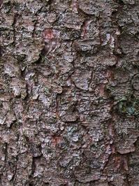 Forest bark 1