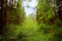 Heavy Rain in Forest