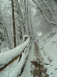 snow storm 2