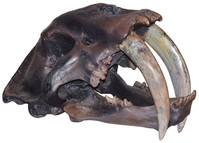 Dinosaur jaw 10