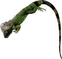 Lizard series 2