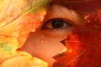 Asian Autumn 3