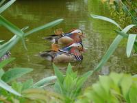 Touring Ducks