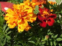 mini flower zoomed