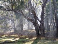 Bullanginya forest 1