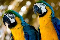 Curious Bird! 4
