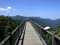 Dorrigo National Park Sky Walk