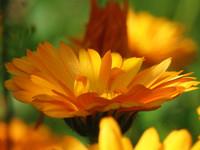 Yellow flower 0