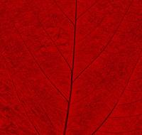 Pastel Leaf 6