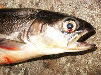 Fishy Fish