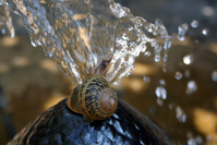 Snails on the water fountain