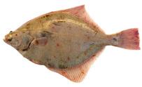 Fish Plaice