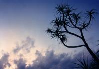 blue dawn