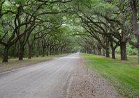 Plantation Avenue
