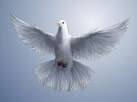 Simple Dove Free Photos