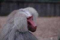 Zoo pics 2