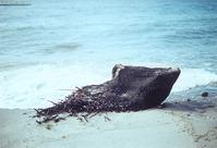 Dead Trunk on Shore