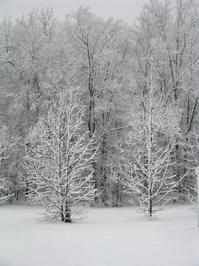 fresh blanket of snow