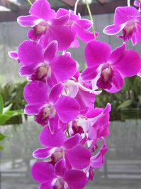 Orchids 3