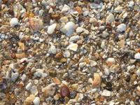 Sea Shells 010