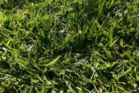 Backlit Grass