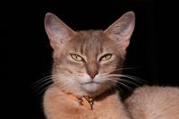 Cat story 12