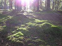 Sunbeams over forest moss