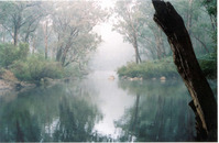 fog at yarragil