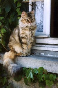 Cat On A Window-Sill