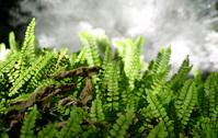 Moss over Krka