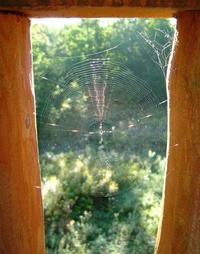 sparkly web