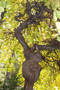 Trees&leaves