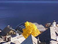 Town, lake and yellow tree