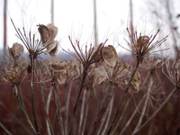 Winter plants 1