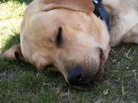 Sleeping Dog 1