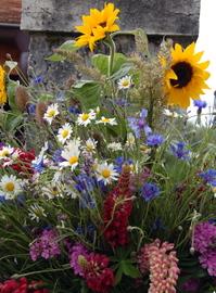 Early summer flowers in a Swiss village