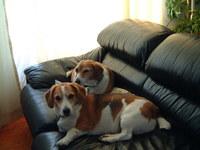 Maggie & Baxter