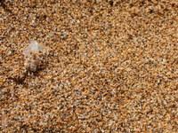 sardinian macro sand