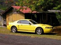 Molokai Mustang