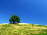 hight_tree_ 1
