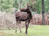 Moose zoo emmen 1
