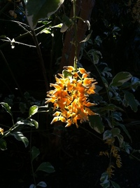 Moody Garden Orchids 9