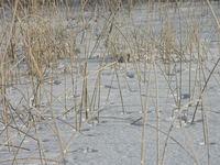 Ice Lake2
